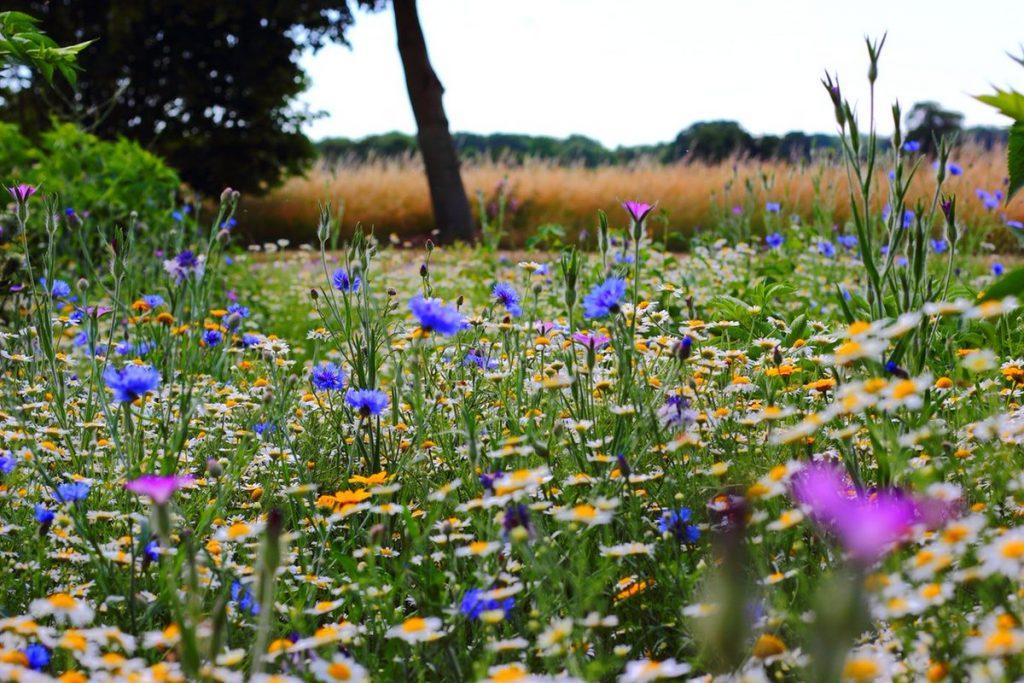 Livadni med dobiva se iz više vrsta proljetnog cvijeća